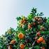 잇츠한불, 제주감귤김치 유산균 활용 화장품 특허 획득