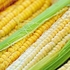 옥수수 껍질에서 '아토피' 화장품 소재 개발